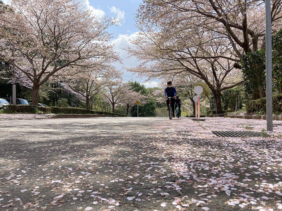 うしくでゆるポタ「つくばみらいの桜めぐり」特別編に行ってきました!